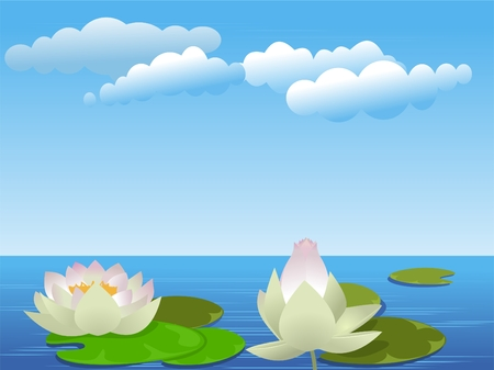 Lotus flowers on the lake