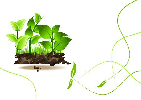 young leaves: Nature fresh background  Illustration
