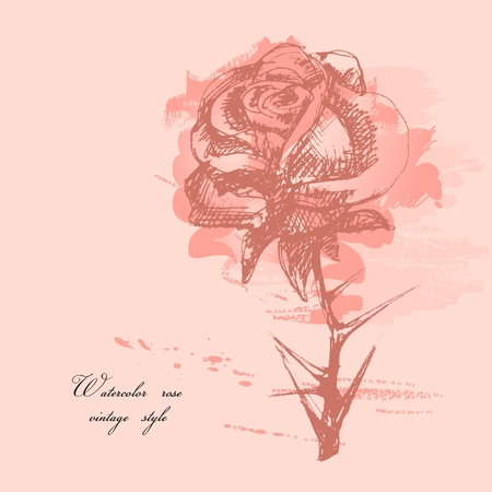 delicate: Vintage rose background  Illustration