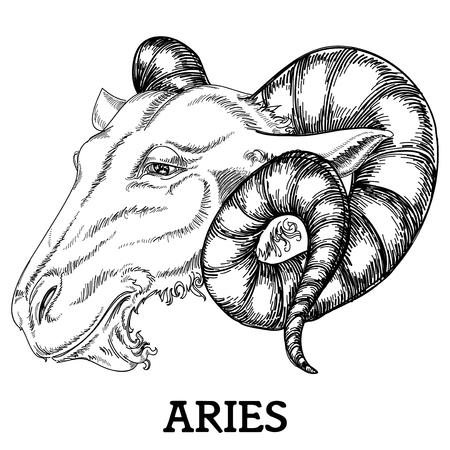 aries: Segno zodiacale ariete Vettoriali