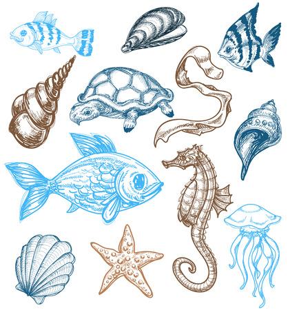 calamar: Dibujo de vida marina
