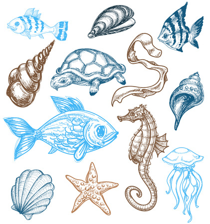 Marine life drawing Vector