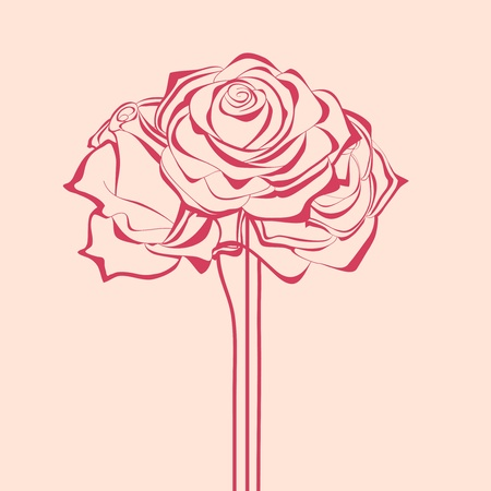 Bunch of roses illustration  Vector