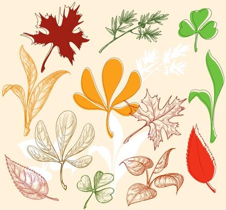 Leaves set Stock Vector - 10206951