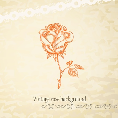 roses pattern: Vintage rose background  Illustration