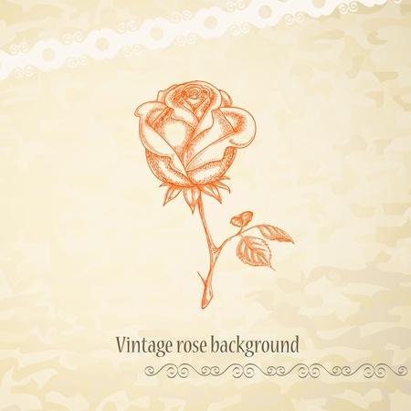 rose silhouette: Vintage rose background  Illustration