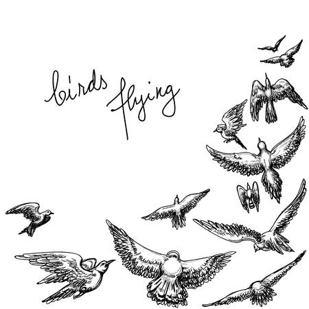 bandada pajaros: Aves de vuelo de fondo, dibujo a lápiz de ilustración vectorial Vectores