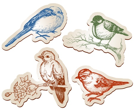 sparrows: Vector birds collection Illustration