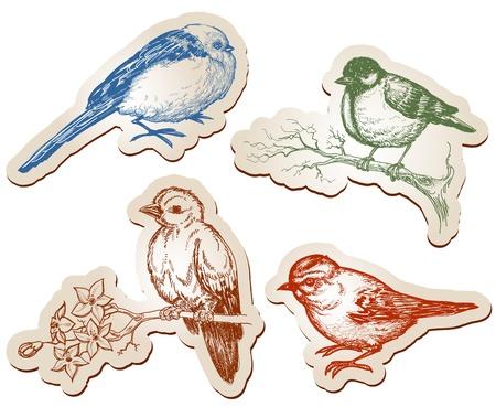 arbol de la vida: Vector colección de pájaros