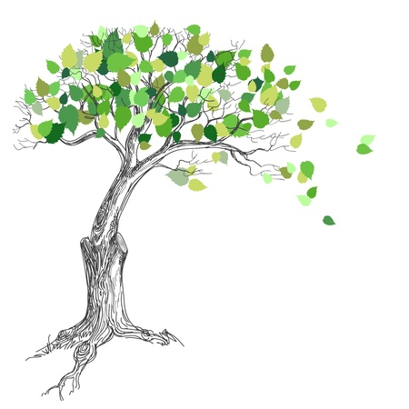 Tree with green leaves Stock Vector - 13655686