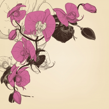 Orchid corner decoration, greeting card vector  Vector