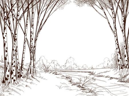 Birch tree forest, graphic background  Vector