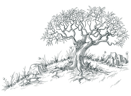 оливки: Оливковое графический дерево Иллюстрация
