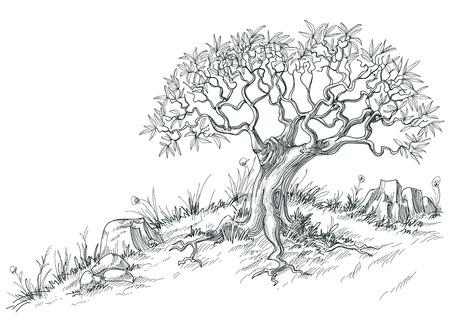 dessin noir et blanc: Graphique de l'olivier