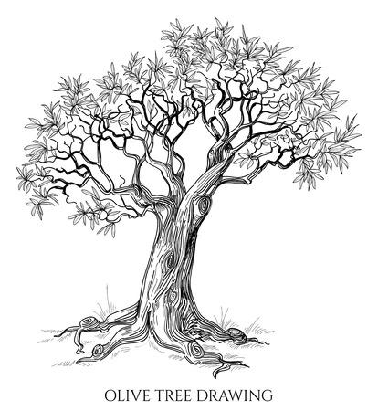 고립 된: 올리브 나무 절연 손으로 그린 벡터 일러스트