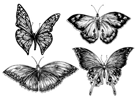 Butterfly vector set Illustration