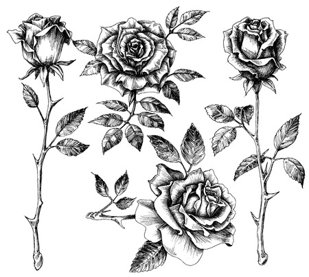 etched: Hand drawn flower set, rose collection