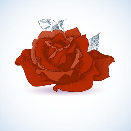 Rote Rose-Design Standard-Bild - 40928565