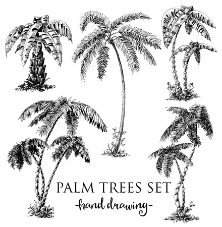 fashion drawing: Detailed palm trees set