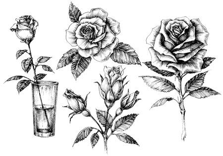 dessin noir et blanc: Roses définir, design floral éléments collecte