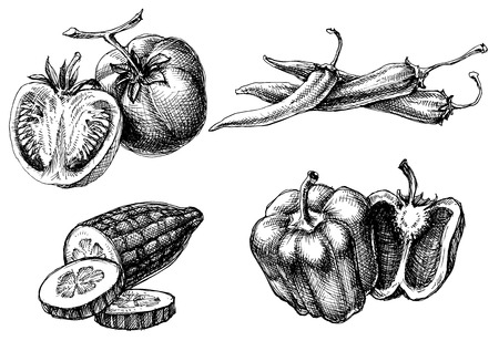 pimientos: Verduras conjunto aislado, estilo de grabado