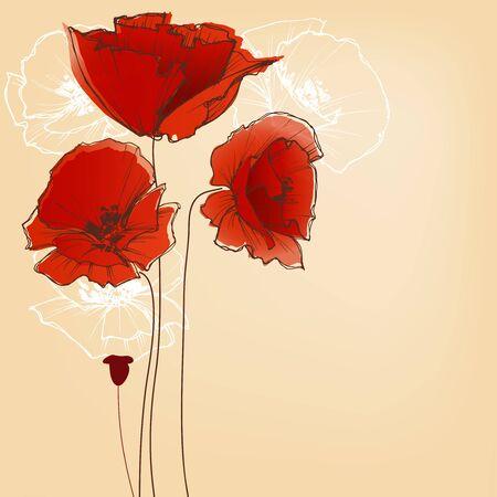 poppy: Flor de fondo para tarjetas de felicitación, el diseño de la amapola Vectores