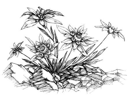 etch: Edelweiss etch