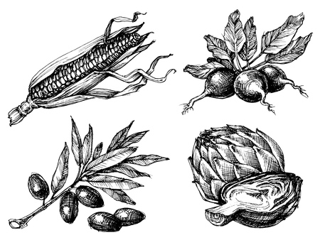 etch: Vegetables set, isolated drawings black over white, etch style. Corn, radish, olives and artichoke