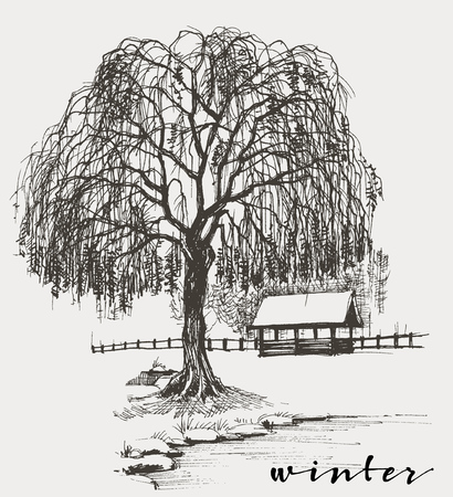 Winter sketch, willow tree Banco de Imagens - 51327202