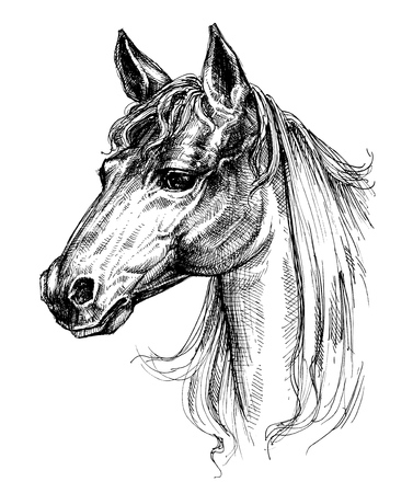 Cheval dessin de la tête Banque d'images - 51327300