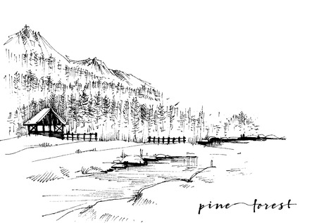 Pine forest sketch