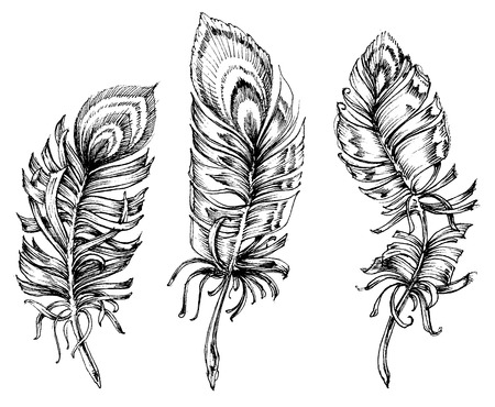 artistic: Peacock feathers artistic drawing