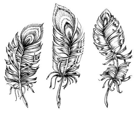 Pauwenveren artistieke tekening