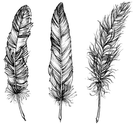 Detailed feathers isolated