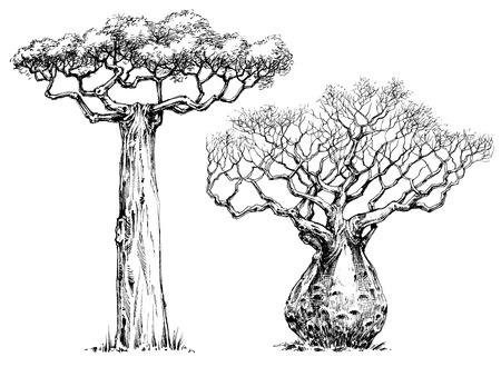 아프리카의 상징적 인 나무, 바오밥 나무 일러스트