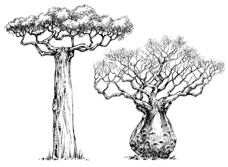 African iconic tree, baobab tree Illustration