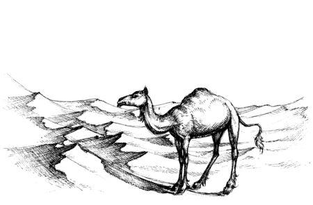 desert sand: Camel in the desert Illustration