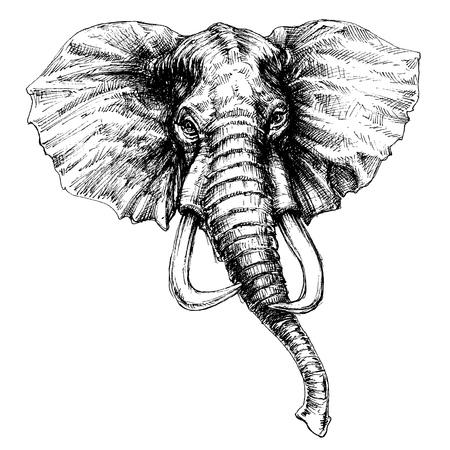 elephant head: Elephant head