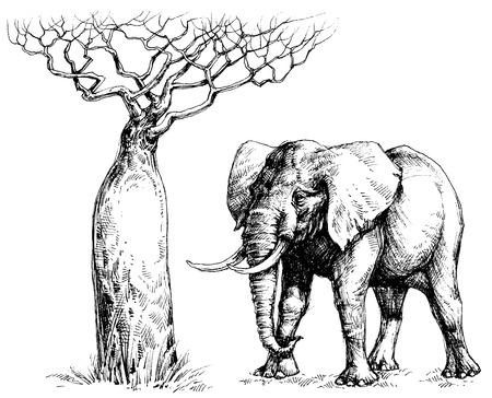 baobab: African elephant and baobab Illustration