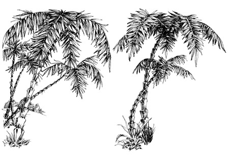 single flower: Palm trees isolated