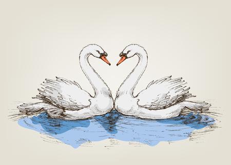 swans: Two swans on lake love symbol Illustration