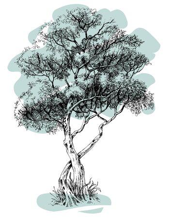 tree isolated: Tree vector isolated Illustration