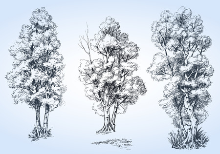 detailed: Isolated trees set, hand drawn detailed Illustration