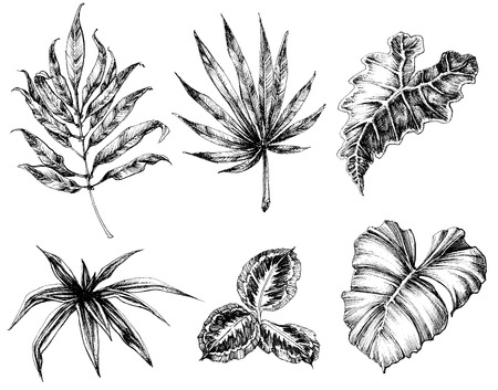 etch: Various leaves hand drawing Illustration