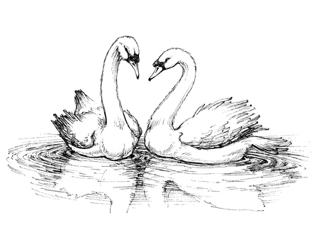 two: Two swans on lake