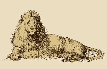 leones: León que se sienta dibujo Vectores