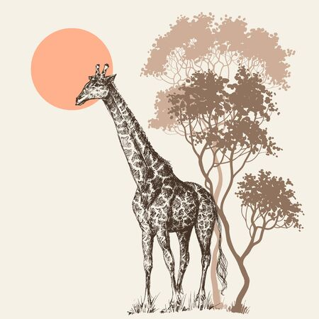 Safari sunset background, nature scenery, trees and giraffe Ilustrace