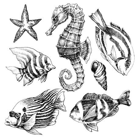 Vis, zeepaardje, het mariene leven met de hand getekende set. Zee leven vector schets