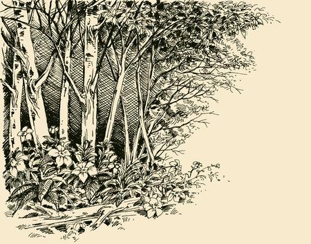 Forest edge drawing, generic vegetation sketch