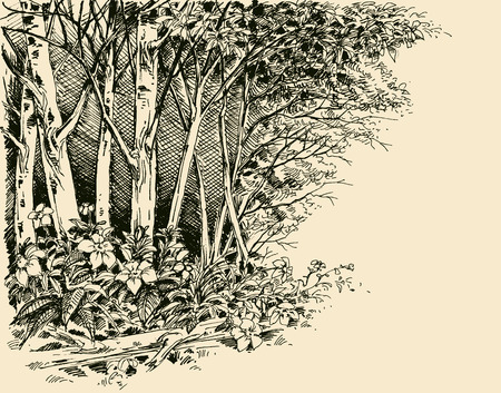 Forest edge drawing, generic vegetation sketch